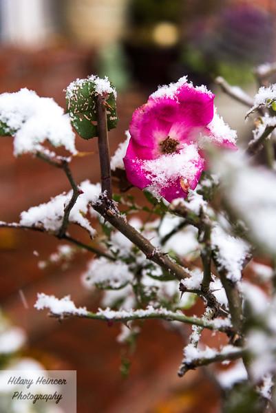 Snowy old town-81.jpg