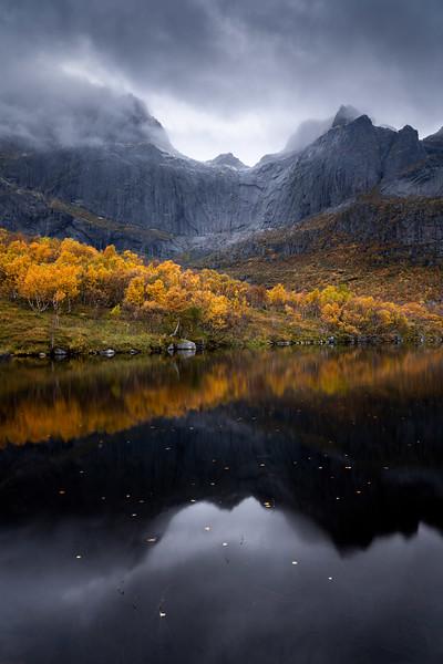 Autumn colors 3 Lofoten moody landscape photography fall mountain birch tree_1.jpg