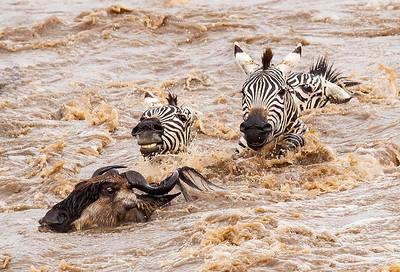 Great Migration Mara River
