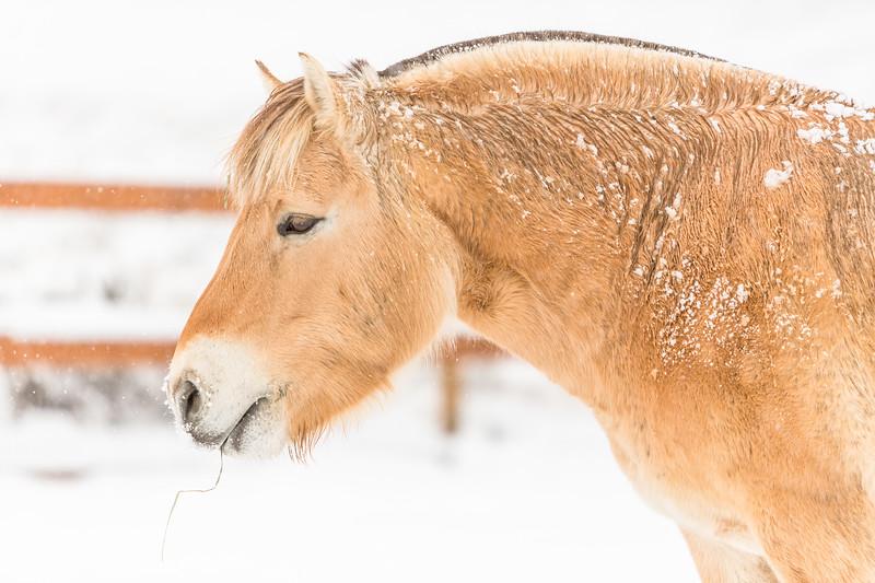 Meet Our Horses