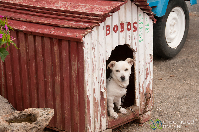 Bobos the Cretan Dog - Crete, Greece