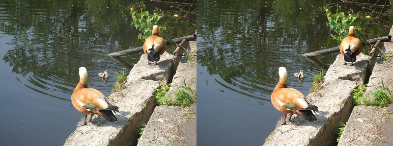 2011-05-29, Sunbathing on Pond Baikal (3D RL)