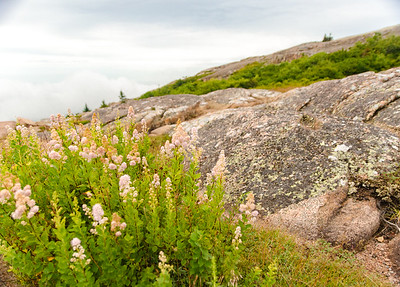 Cadillac Mountain/Acadia Nat'l Park/ME - July 2017