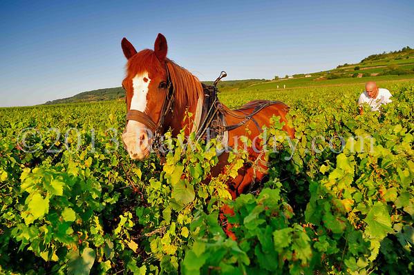 HORSE & WINE