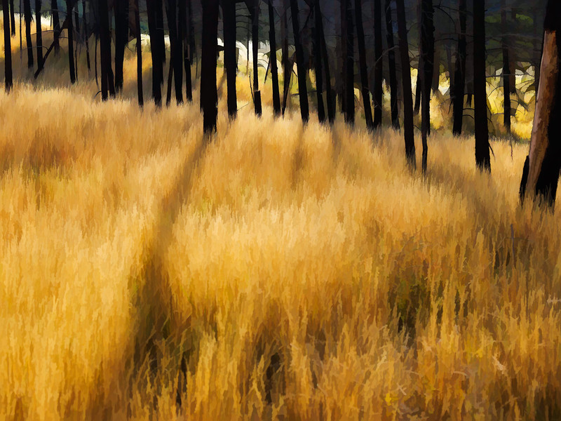 Forest Grass | Wall Art Resource