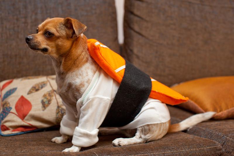 Dog-sushi-halloween-30.jpg