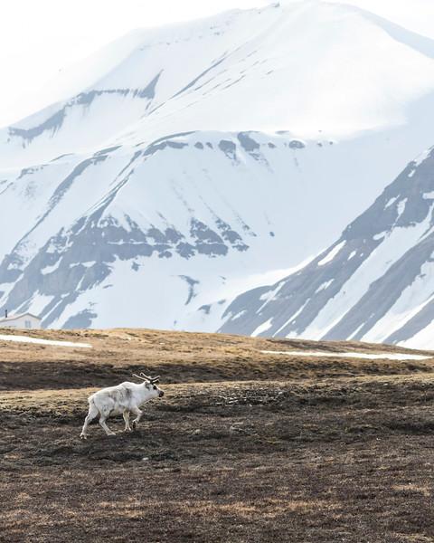 Inspirato-Arctic_Expedition18-02-Longyearbyen-0065.jpg