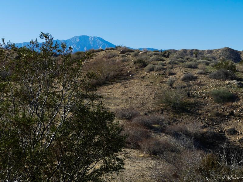 Hike at Big Morongo Canyon (17 of 28).jpg