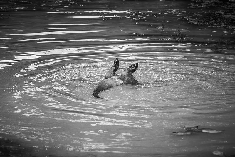 2020 - Otters 005
