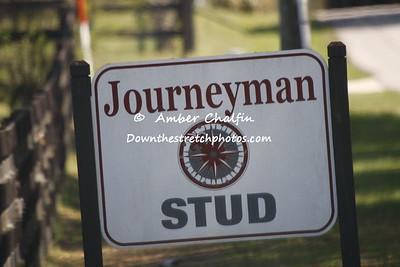 Journeyman Stud