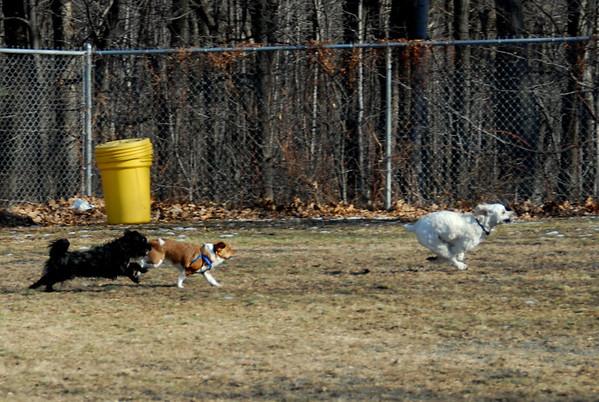 2010-01-16 Denville Dog Park in the Winter