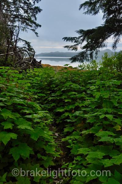 Trail near Campsite , Stryker Island
