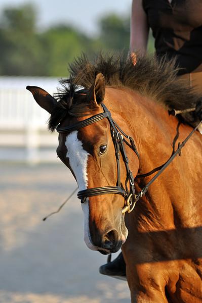 Horses July 2011 679a.jpg