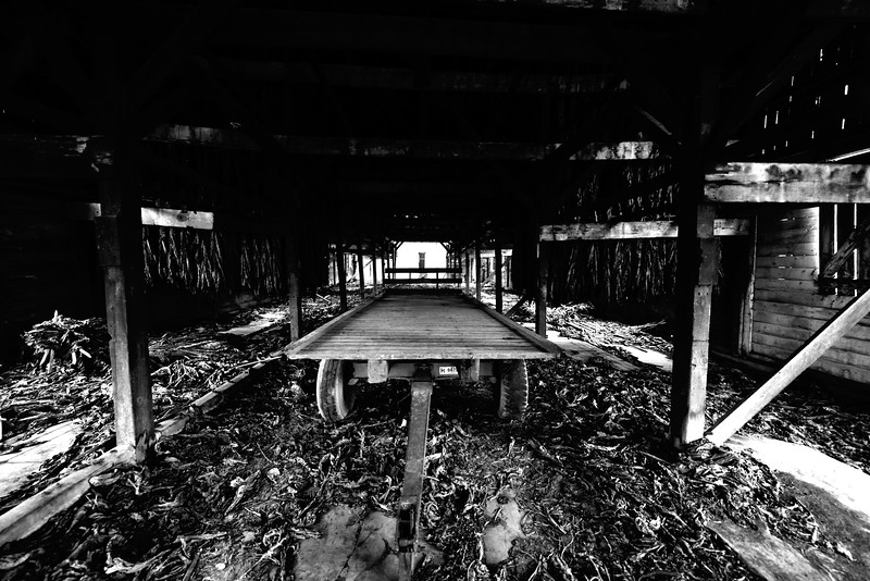 Abandoned Tobacco Barn