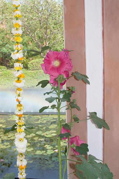 Sheraton Walkway Flowers 1.jpg