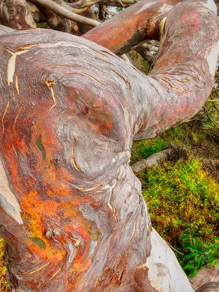 Tree, Pescadero State Beach, California, 2010