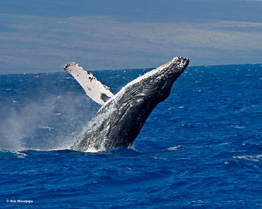 Maui - March 2010