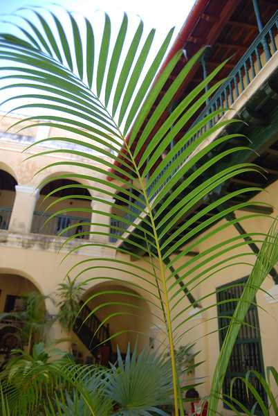 Trinidad courtyard - Lou Tucciarone