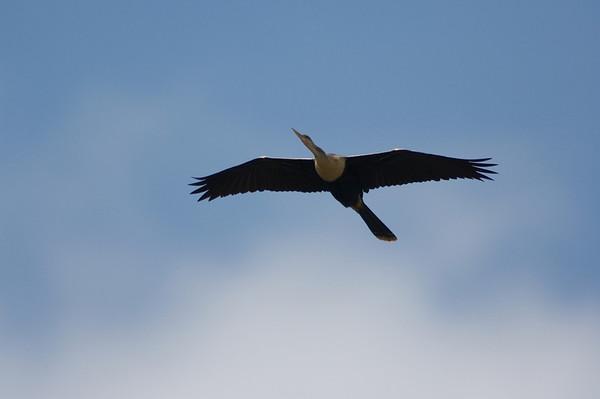 Florida Birds and Nature