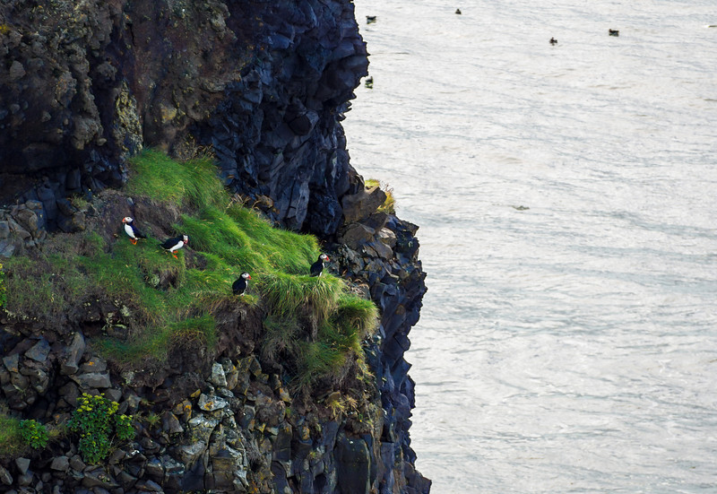 Puffins at Dyrhólaey near Vik.