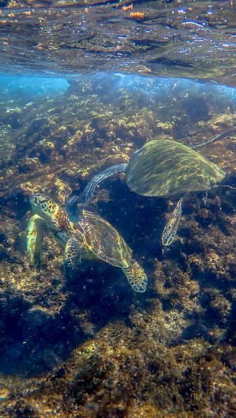 Day 6: Snorkeling At Black Rock