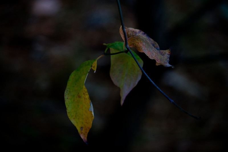 Leaf in the Darkness