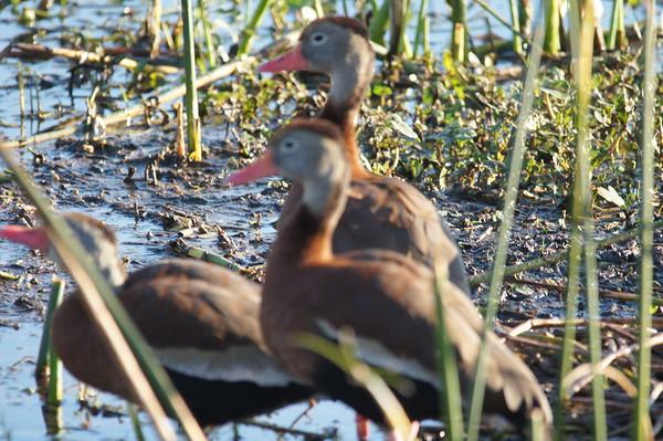 wetlands 2/15/15