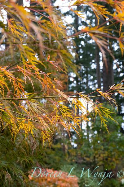 Dietrick fall garden_2063.jpg