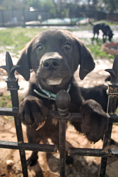 girl puppy.jpg