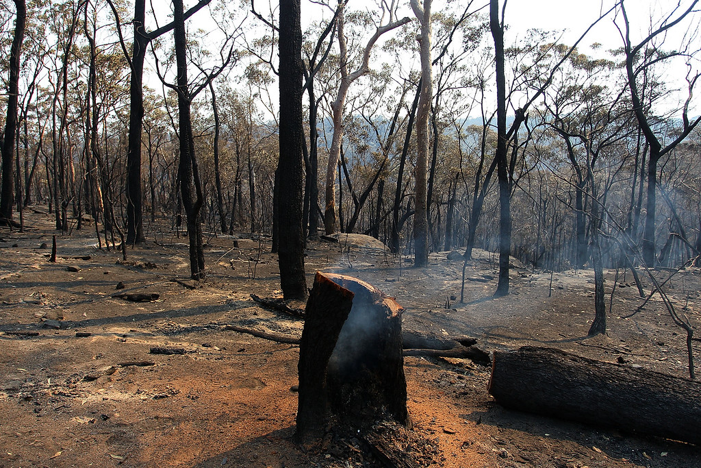. A tree stump smolders after a bushfire went through Yellow Rock as seen on October 21, 2013, Australia.  (Photo by Lisa Maree Williams/Getty Images)
