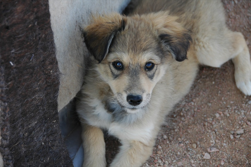 Sweet Puppy - Manzhyly, Kyrgyzstan