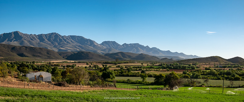 The Swartberg Mountains in the early morning light - just gorgeous!