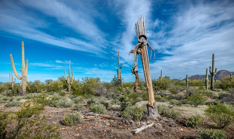 I-11 - Old Growth Desert #3