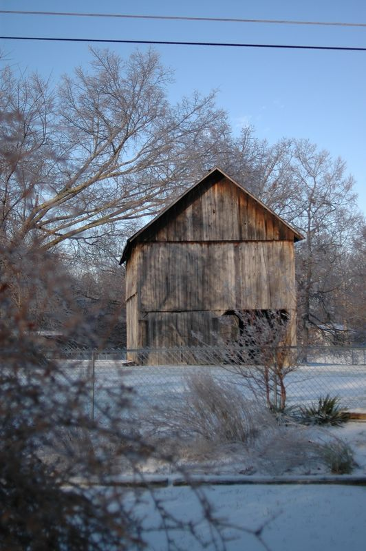 the barn, in early morning light