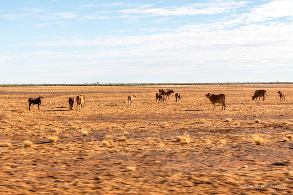Boulia to Winton via Middleton