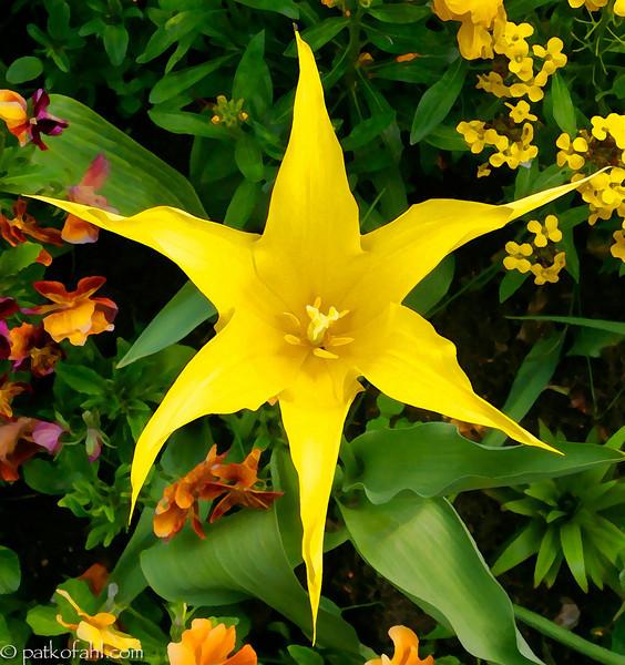 Yellow_Star_1__MG_9780.jpg
