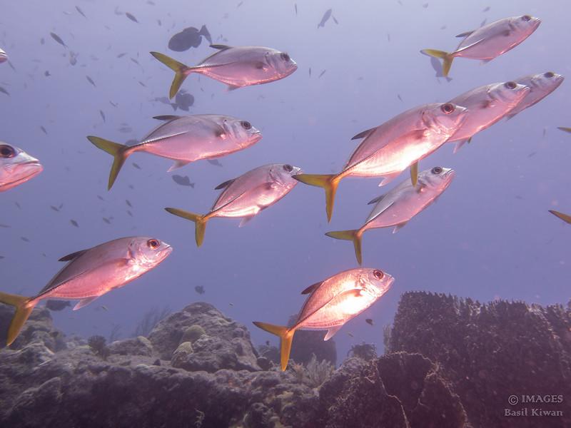 Saba Land and Sea-1000752.jpg