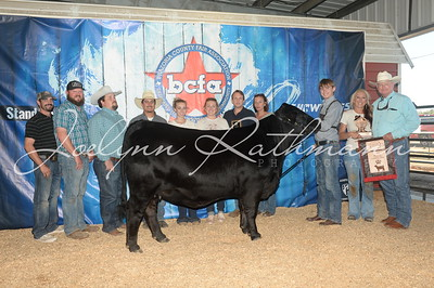 Scramble and Commercial Heifer Show Backdrops