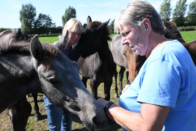 20190915 Ponies bij Jose GVW_4862.JPG