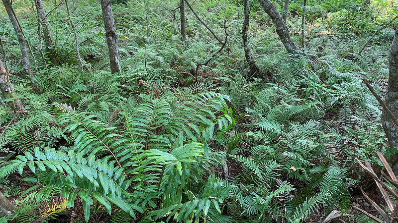 Forest floor covered in ferns