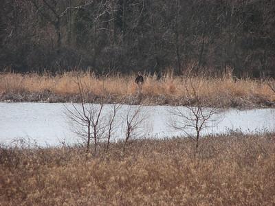 MVOC Caesar Creek Shamrock Hunt - March 19
