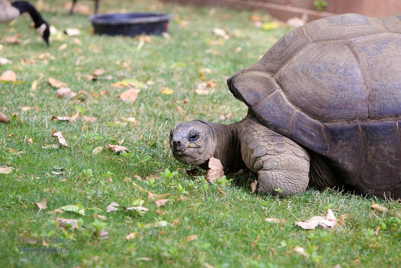 2016-07-17 Fort Wayne Zoo 974LR.jpg