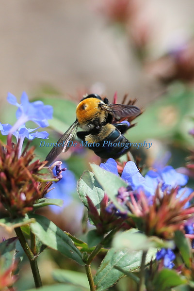 Wildflowers and Bees 8-21-12