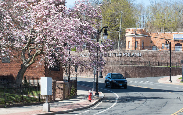 04/17/19 Wesley Bunnell | Staff The Welcome to Little Poland sign can be seen behind a cherry blossom tree near the intersection with Main St. & Broad St. on Wednesday afternoon.