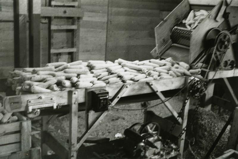 JA102.  Corn conveyor – 1937‡.jpg