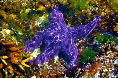 StarFish/Shellfish