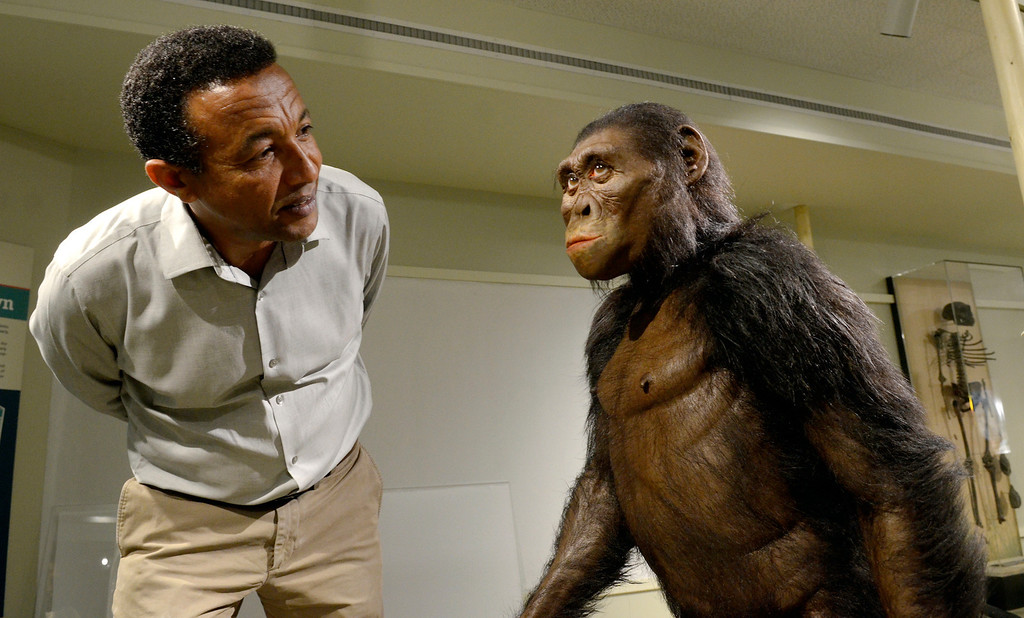 . Jeff Forman/JForman@News-Herald.com Yohannes Haile-Selassie, currator of physical anthropology at the Cleveland Museum of Natural History takes a close look at the lifelike sculpture of Lucy by paleoartist John Gurche.