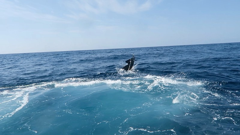scottSailfish4.jpg