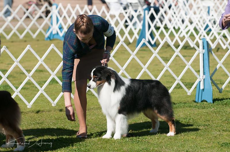 20170205_Australian Shepherds_Lost Dutchman Kennel Club-82.jpg