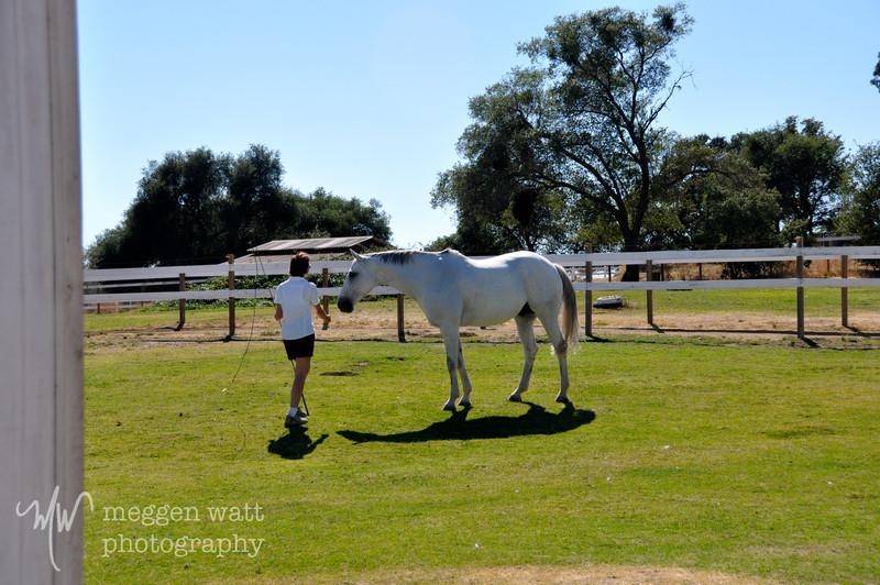 EB&Horses-145.jpg